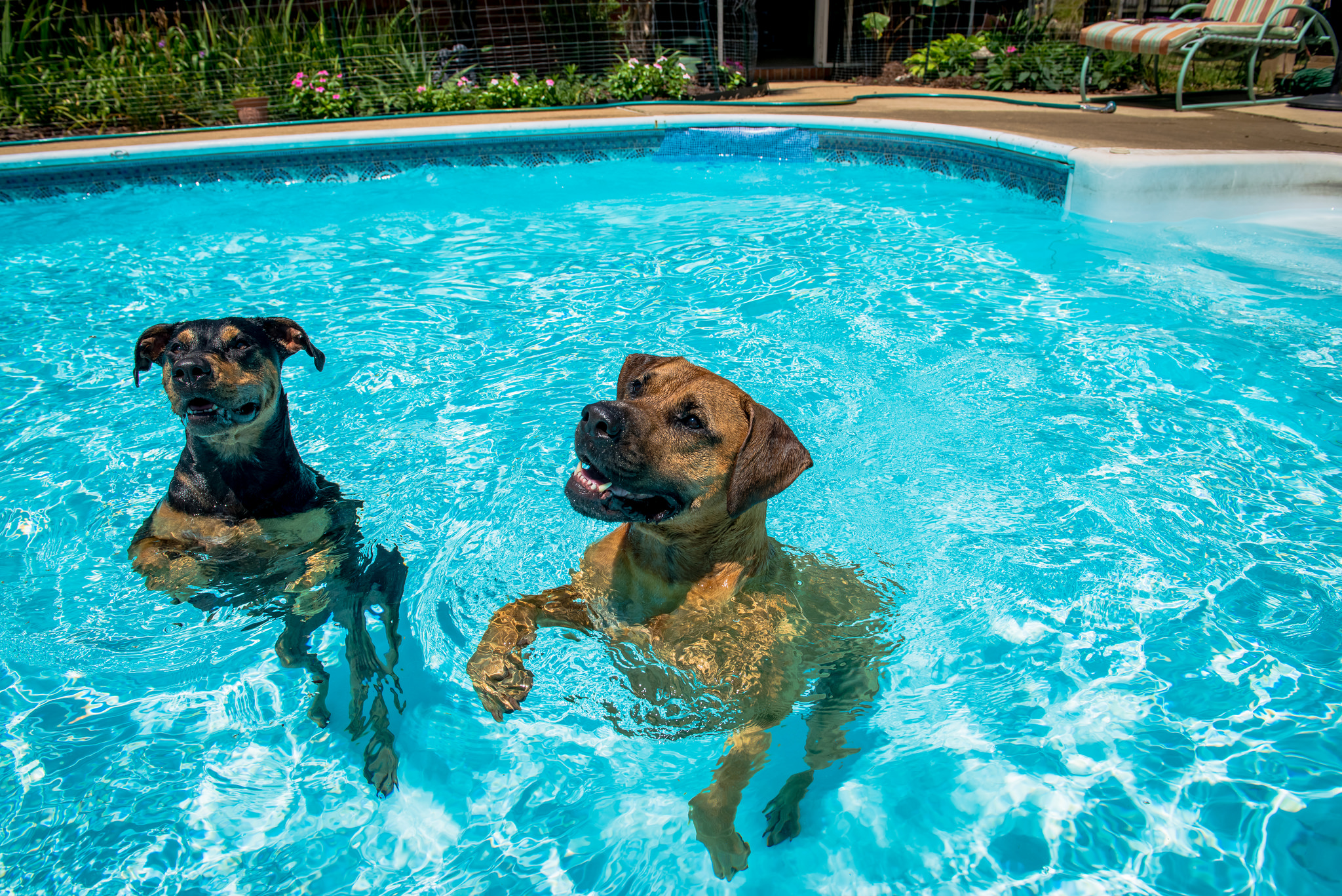 7 Home Improvement Projects for Houses with Dogs ~ Best Hot Tubs ...